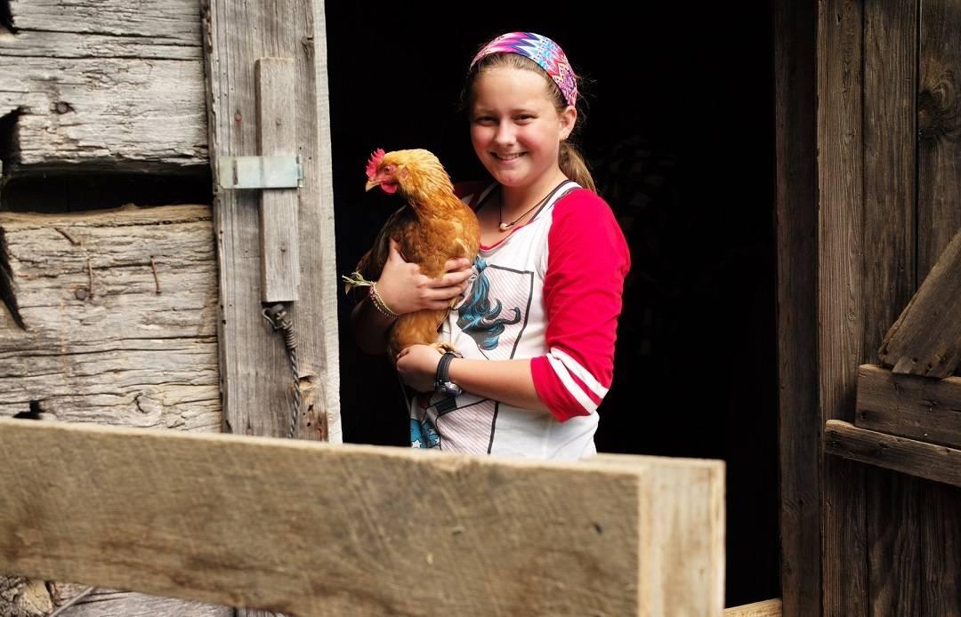Meet Beyonce the Chicken