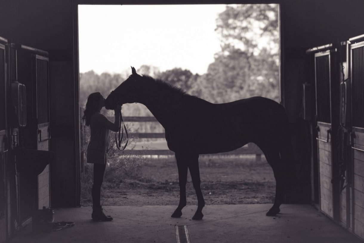 equine therapy benefits